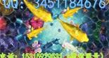 江苏扬州手机捕鱼游戏APP开发机遇与挑战并存